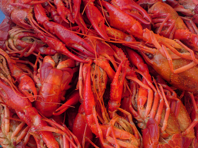Louisianas favourite crustacean has turned up as an invasive species in Michigan