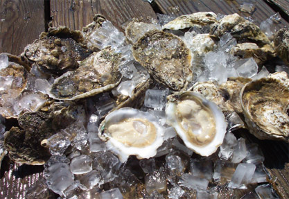 What Makes a Gulf Oyster Worth $3 Apiece? Farmed Oysters Guarantee Flavor, Chefs Say