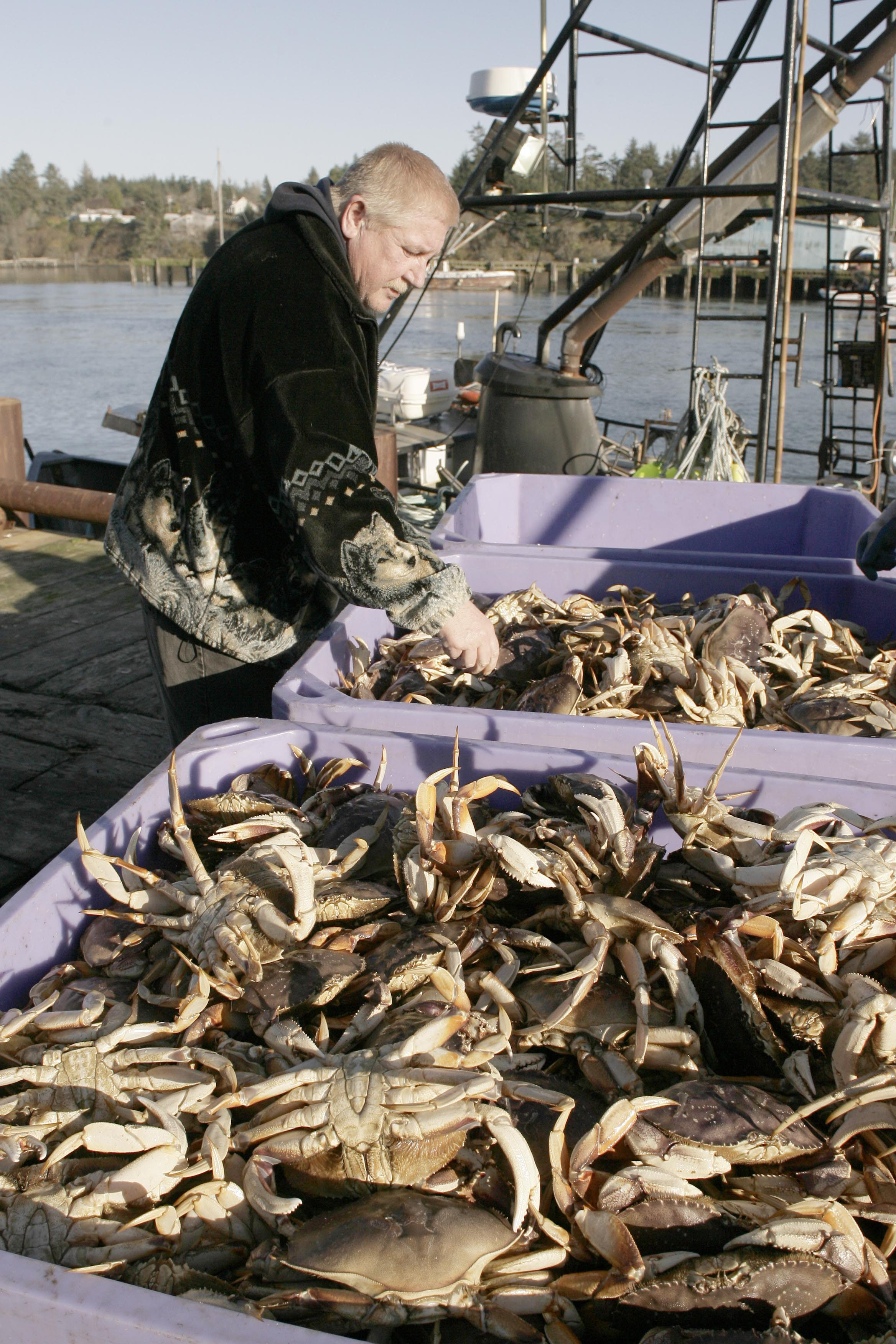 Dungeness Crab Continue to Fill Out in Oregon; Season Delayed Until Dec. 31