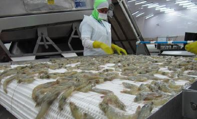 Ecuadors CNA Embraces the Addition of Shrimp to Seafood Import Monitoring Program