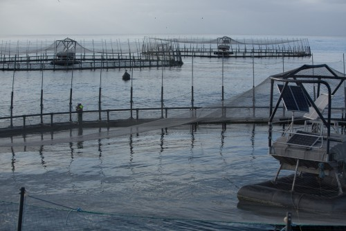 Salmon Surging as Fish Farm Firms Huon Aquaculture and Tassal Cash in With Record Profits