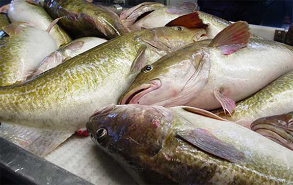 NMFS Shuts Down Adak Cod Fishery Early as Dutch Harbor Boats Make Trips for Aleutian Cod
