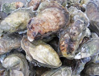 South Carolina Commercial Fishing Struggles Amid Booming Coastal Economy of Vacationers, Real Estate