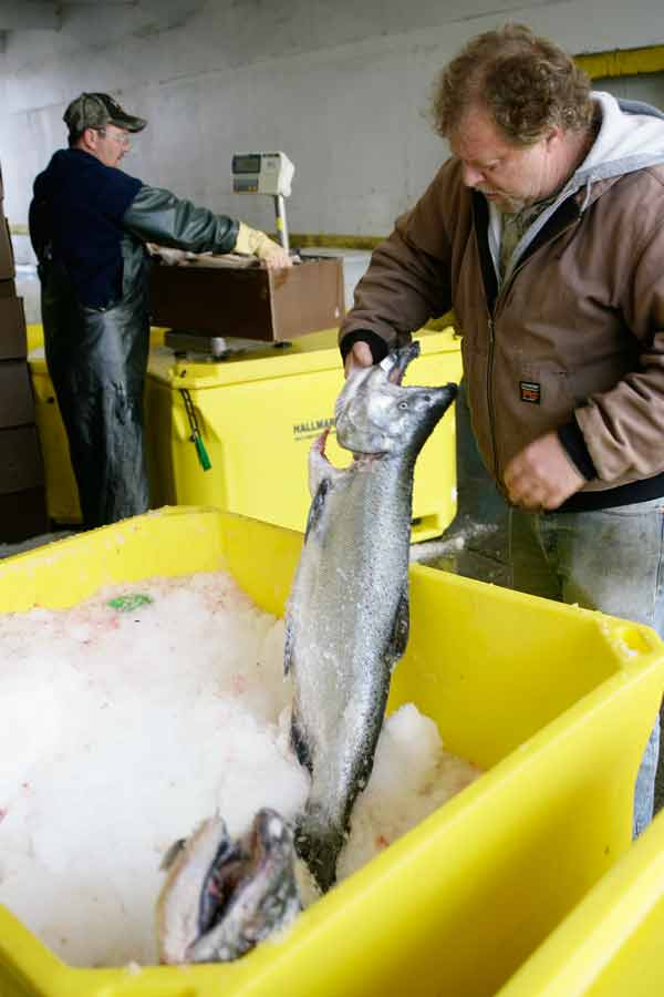 Oregon Officials Working on Disaster Aid for Salmon Fishermen