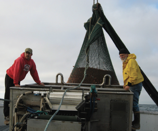 Oregon Pink Shrimp Fishery Has Slow Start; Fishermen Want to Let Shrimp Grow