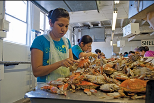 Healthy Chesapeake Crab Hauls Expected, Concerns over Labor Persist
