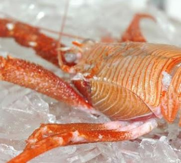 Salmones Camanchaca to Become Public Company, Langostino Lobster Gets MSC Certification