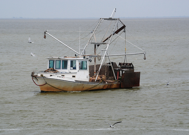Texas Gulf Coast Fishing Industry Struggles After Hurricane Harvey