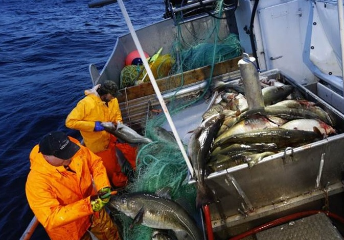 Russian Fishing Tycoons Expanding in Barents Sea