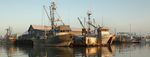 Canada Unveils Updates to Fisheries Act to Cautious Praise from Industry, Environmentalists