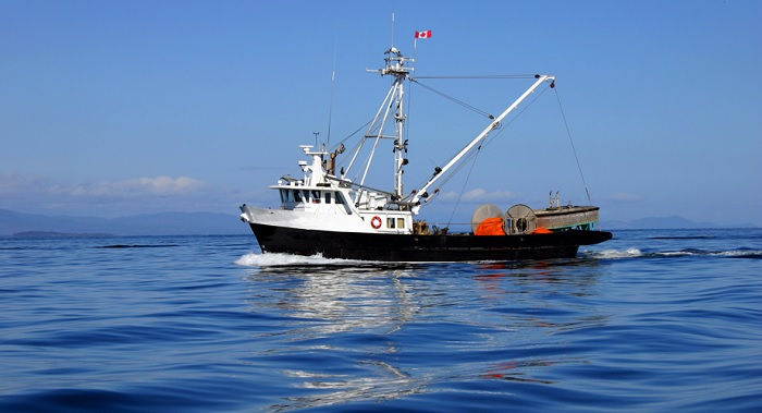 New Study Says Marine Reserves Can Help Commercial Fishermen Avoid Bycatch Choke Points