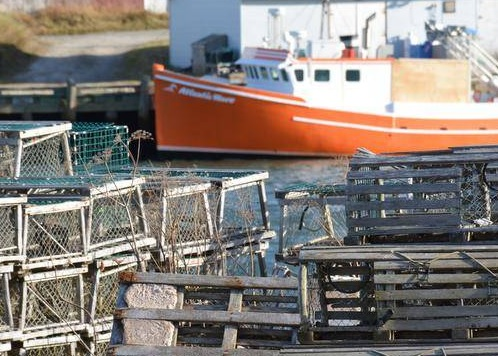 PEI Lobster Harvesters in 26A Vote to Increase Carapace Size