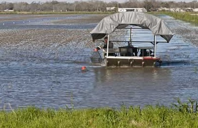 Crawfish Concerns: White Spot Virus Hitting Louisiana Ponds, Threatening Industry