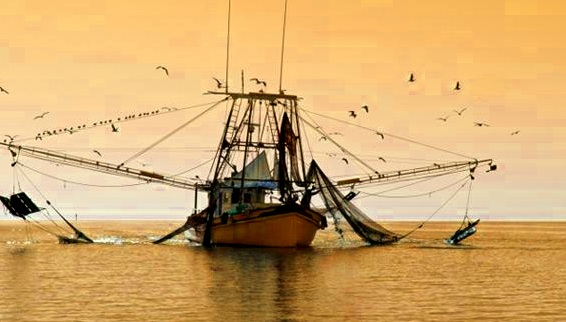 Gulf Shrimp Landings Hit 100 Million lbs. in 2017, an Improvement, but Still 2nd Lowest Since 2010