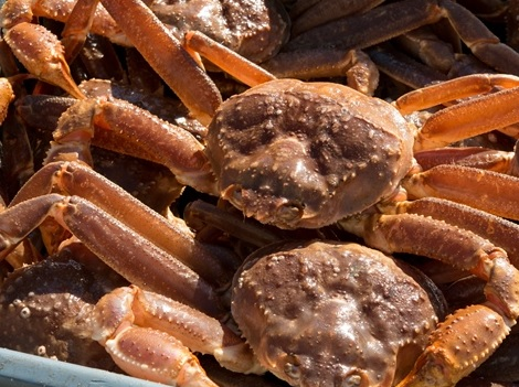 Battle Over Snow Crab by Russian Oligarchs Leads to Record Bidding in Quota Auction