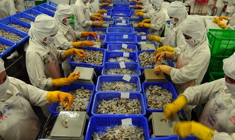 Indian Shrimp Imports to US Continue Blistering Pace Ahead of Peak Production Period