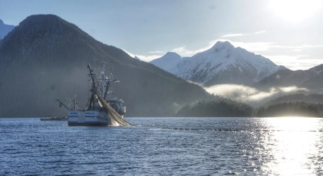 Portion of Kodiak Sac Roe Herring Fishery Temporarily Shut Down for Lack of Fish
