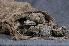 Texas Cracking Down on Illegal Oyster Harvesting
