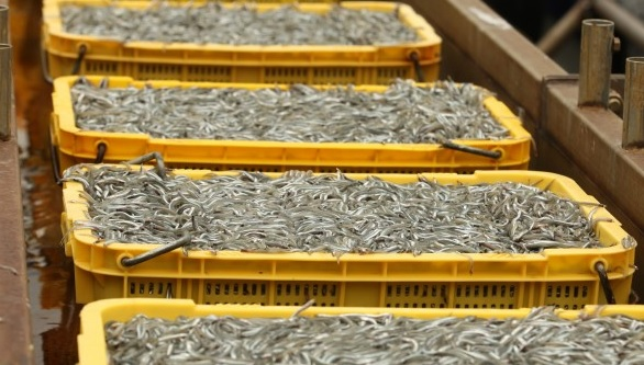 Maine Elver License Lottery Closing Monday, January 15