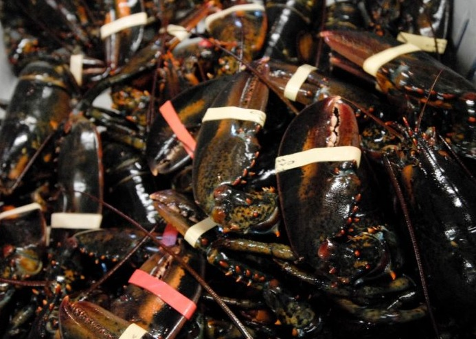 Booming Demand for Lobster Means Record Catches and High Prices