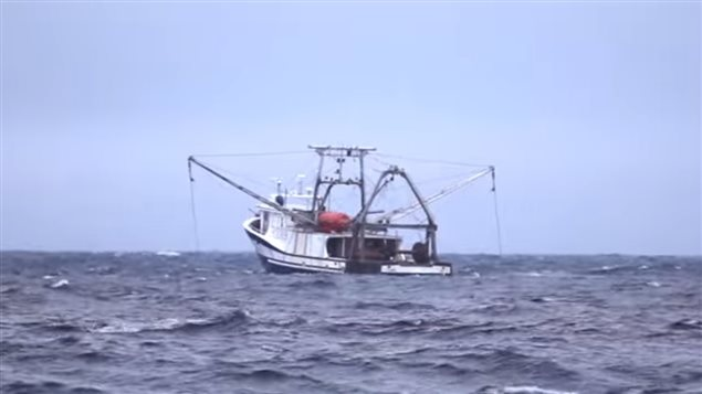 Quebec Fishermen Worry over Survival of Shrimp Fishery