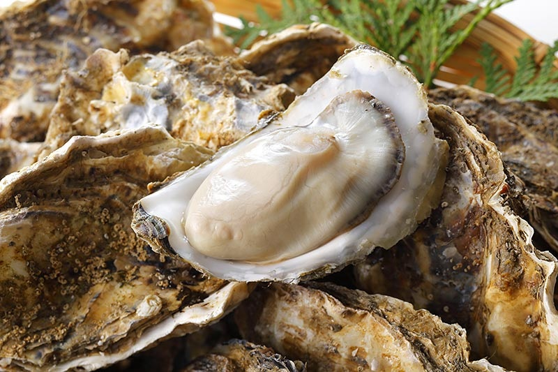 Louisiana Lab Using Federal Research Grant to Breed High-End Oysters