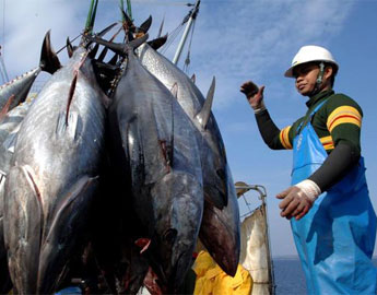 Independent Adjudicator Finds No Shark Finning Issue in PNA Tuna Fishery