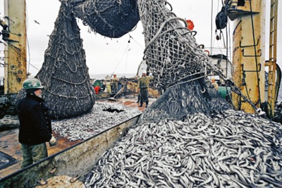 Russia Plans to Seize Fishing Quotas from Producers Who Build Trawlers With Foreign Capital