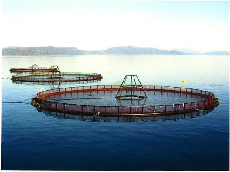 Washington State Senate Passes Bill to Phase out Salmon Farming by Wide Margin