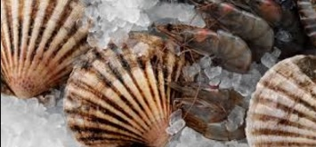 Kevin Stokesbury's SMAST Scallop Survey Covers Entire East Coast; Projects Good Biomass