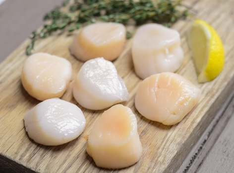 Surge in Atlantic Scallop Landings Sends Auction Prices and Wholesale Market into Tailspin