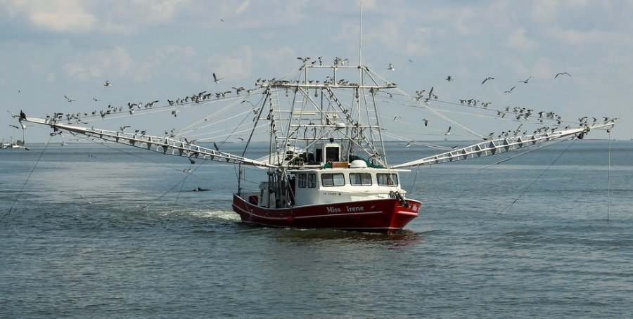 Inshore Shrimpers in Lousiana Vulnerable to Losses from Mississippi Sediment Plans
