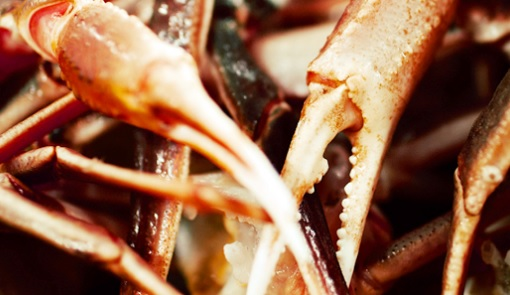Russian Crab Companies Delay Fishing Due to New Processing Rules; Crab Prices Rise