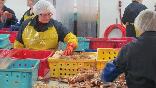 Newfoundland Crab Producers Blast Price Panel Ruling; Say Increases Risk of Market Collapse