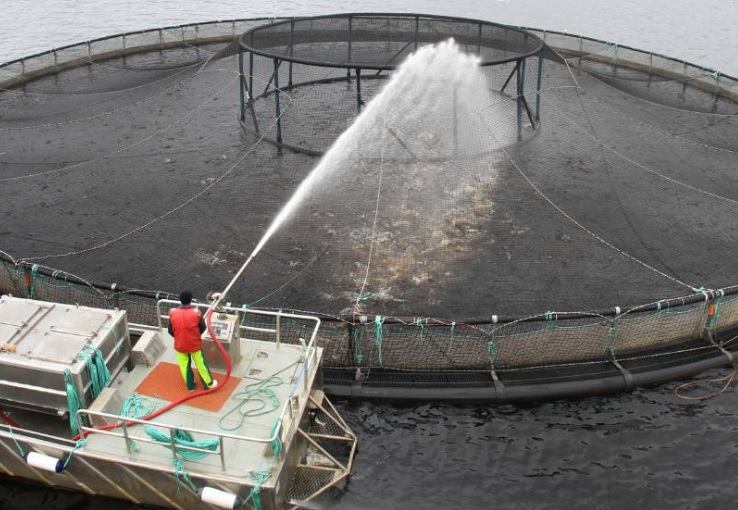 Tassal, Huon Aquaculture Defend Commitment to Environment After Report on Tasmanian Salmon