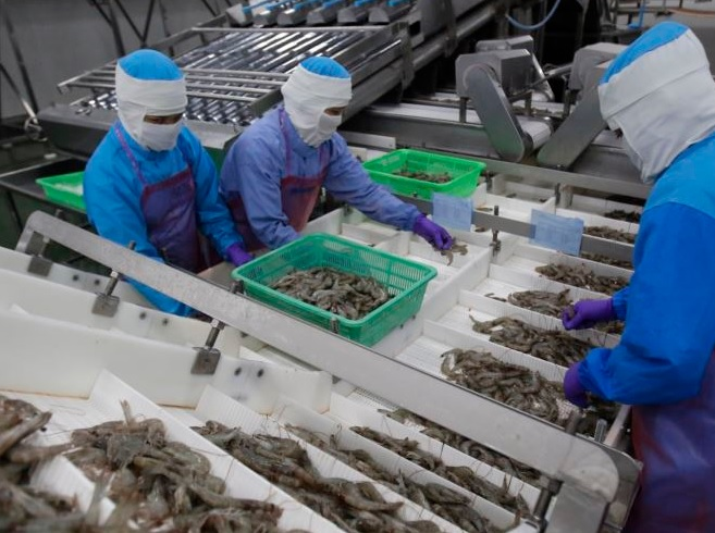 Thai Producers Plan for Shrimp Output to Rebound in Second Half of 2017