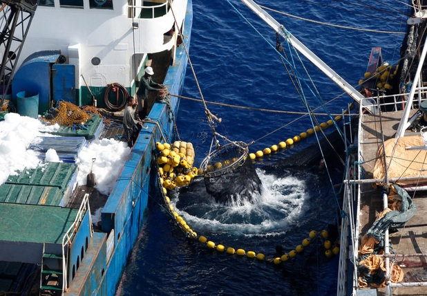 ISSF Adopts First Vessel Registration, Transshipping Requirements for Tuna Longliners