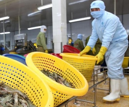 Vietnam Emerged as Major Market for Indian Shrimp Exports in 2016