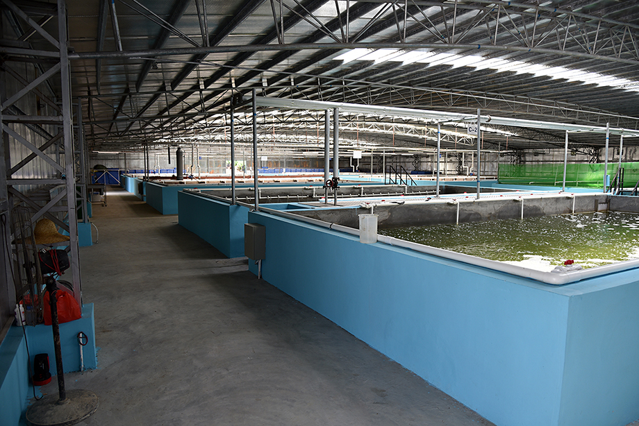 Hong Kong's Tri-way Industries Growing Two New Fish Species At Aquaculture Farm 2