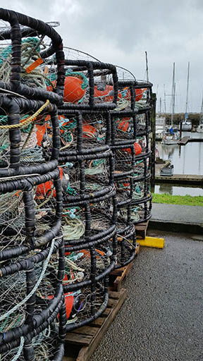 Crabbers Hang Hopes on Oregon, California Domoic Testing for a January Opening
