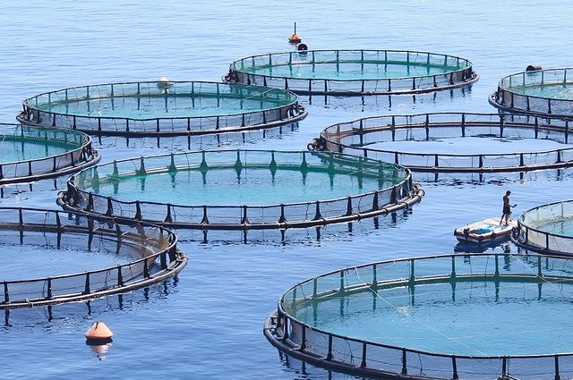 Newfoundland and Labrador Aquaculture Plan Draws Critics