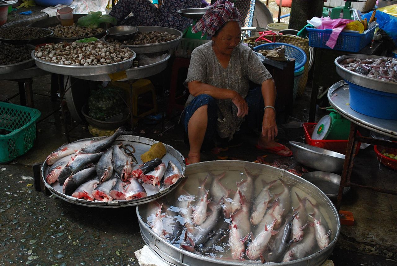 Vietnam Basa Plants Slow Production Due to Short Supply