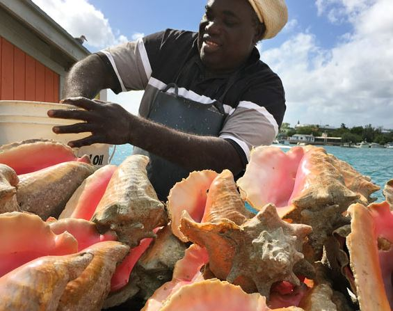 Fishers Alliance Makes Conch Protect Proposals