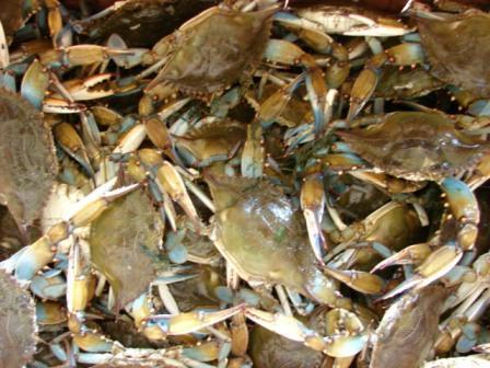 Seafood Jubilee As Low Oxygen Drives Fish and Shrimp Ashore in Mississippi