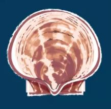 Scallop Group Praises NMFS Decisions on Openings, But Still Wants Georges Bank Area as Well