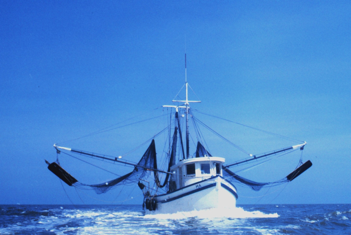 Georgia Extends Shrimp Trawling Season Until Jan. 15