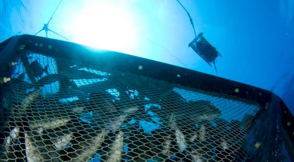 With Largest EEZ in World US Wont Grow a Single Lb. of Fish in Federal Waters Say Ocean Stewards