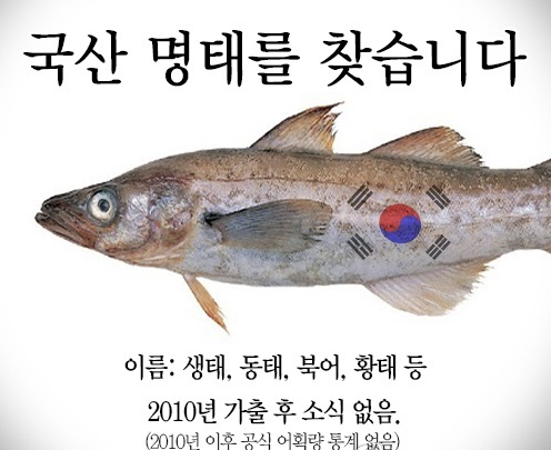 Koreans Wild About Alaska Pollock; Celebrate the Finding of the Near Extinct fish in Local Waters