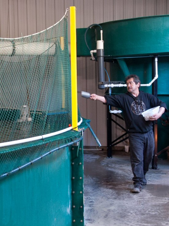 Canadian Land-Based Fish Farm Operating with Modest Profit 3 Years After First Harvest