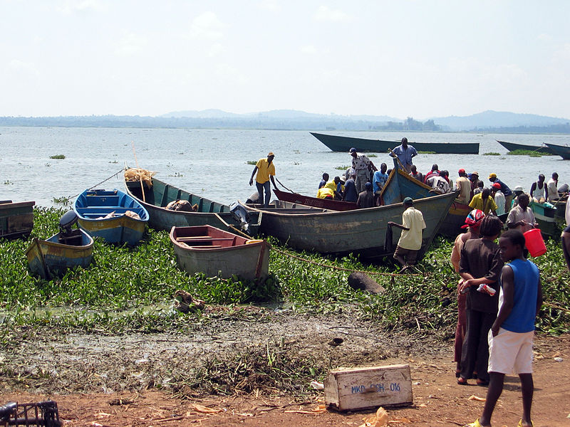 Factories to Reopen after Record Fish Stock in Lake Victoria